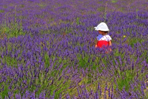 Child wearing a hat on a lavender plantation in Provence, southe